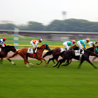 Photograph of horses racing